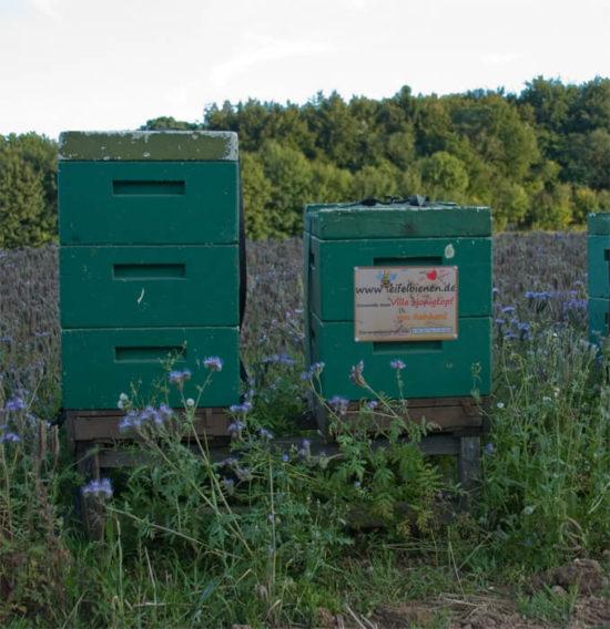 Bienenpatenschaft Bild 2