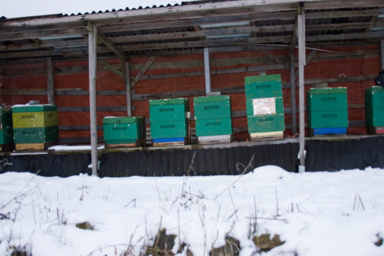 Premium-Bienenpatenschaft Bild 2