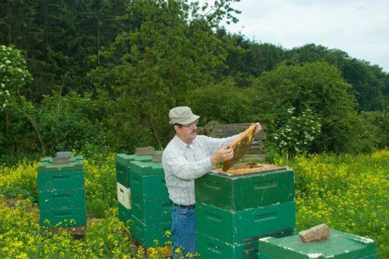 Premium-Bienenpatenschaft Betreuung durch Imker